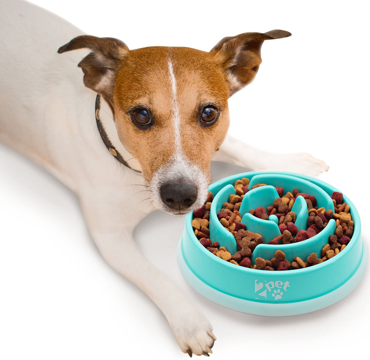 slow down dogs eating