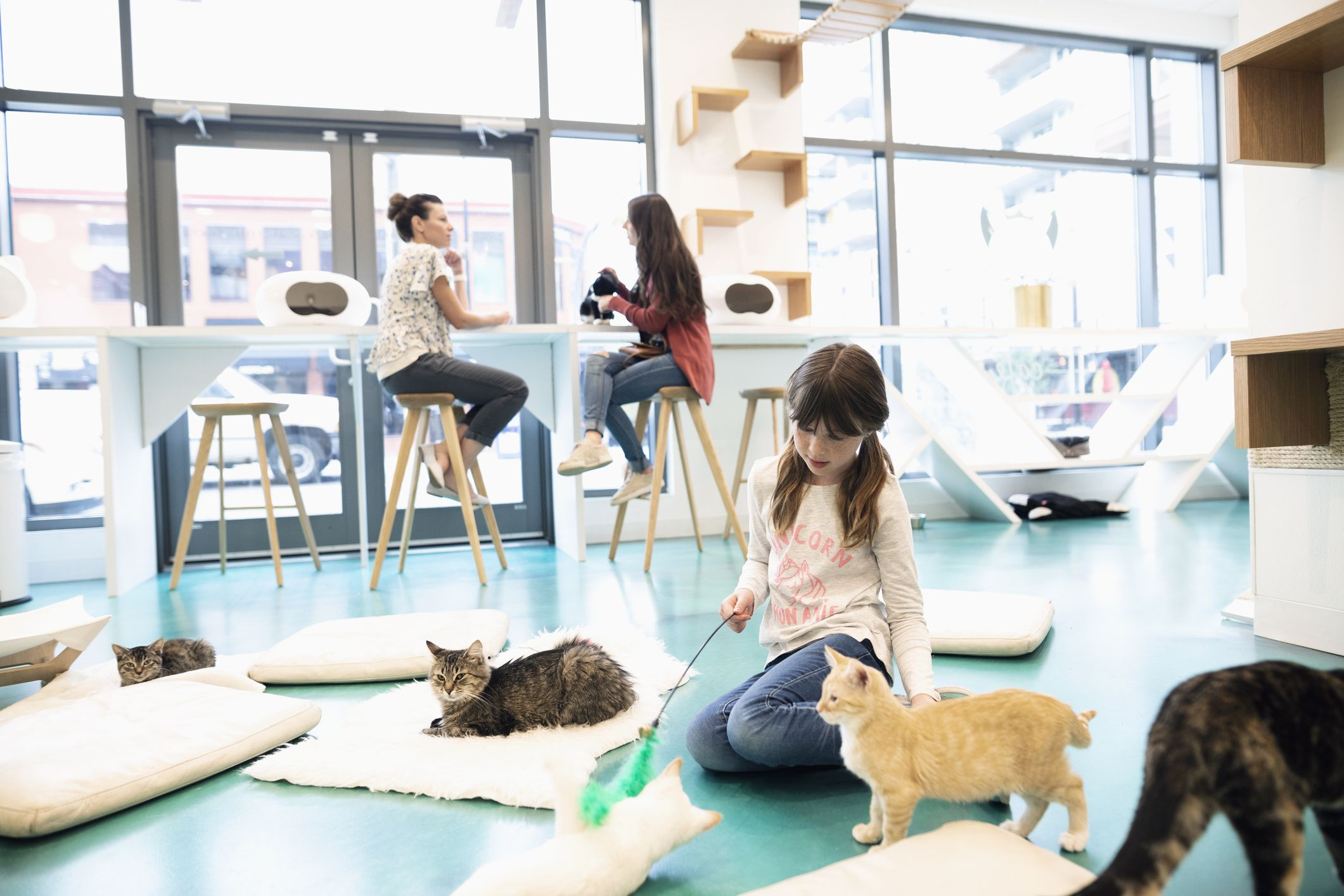 about cat cafes