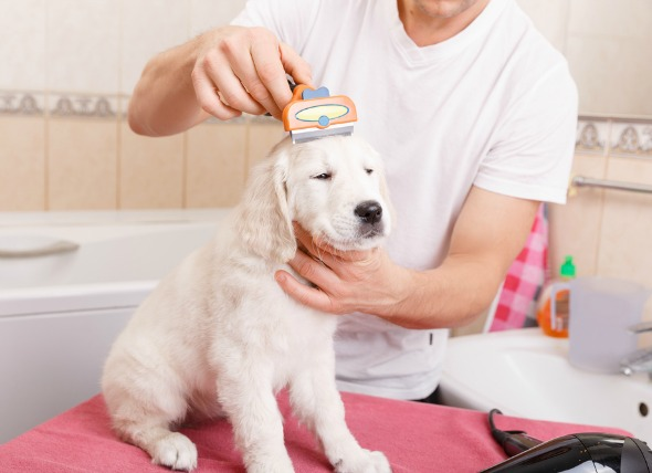 for grooming dogs