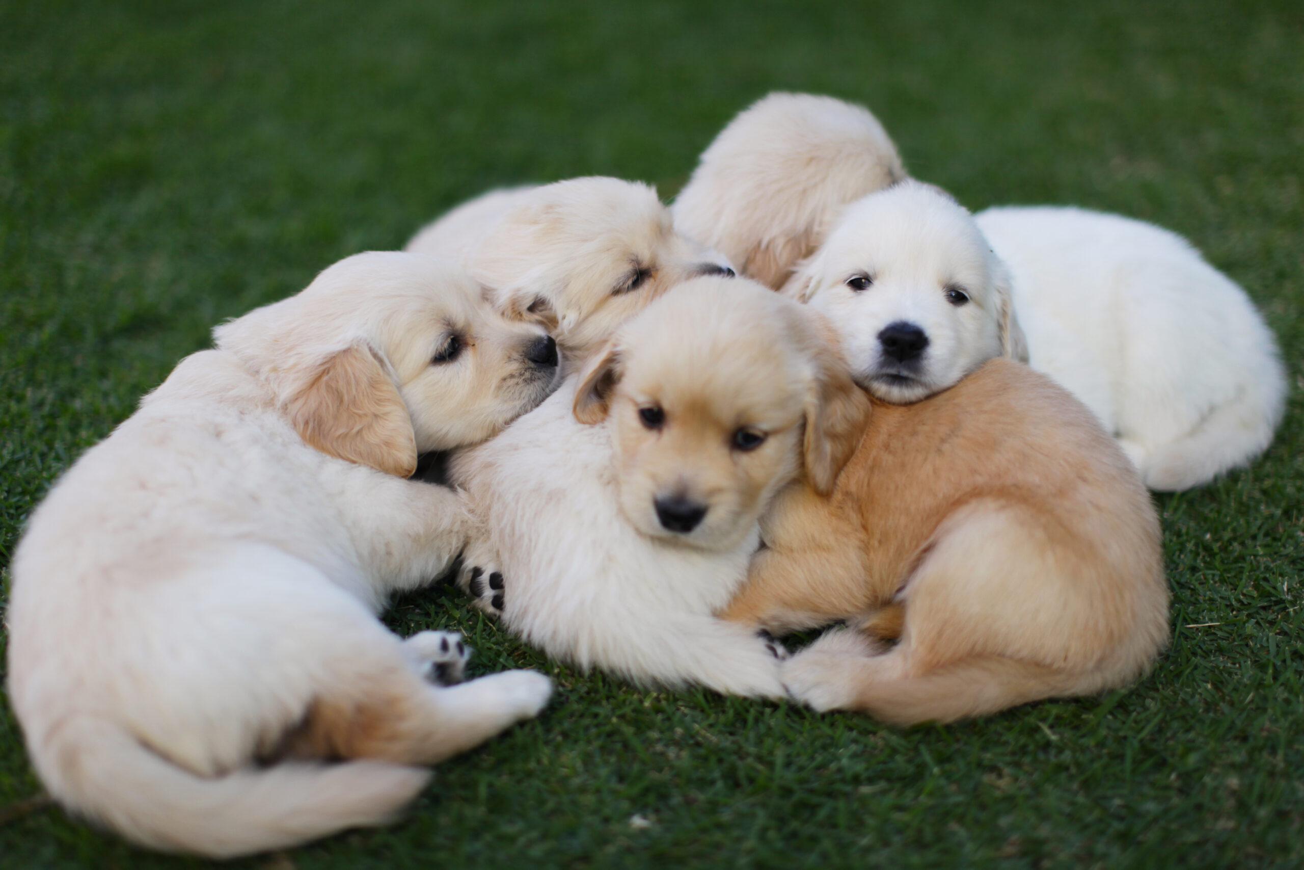 Dog development stages