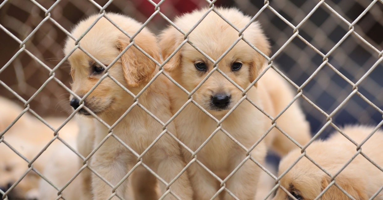 adopt a pets from shelter