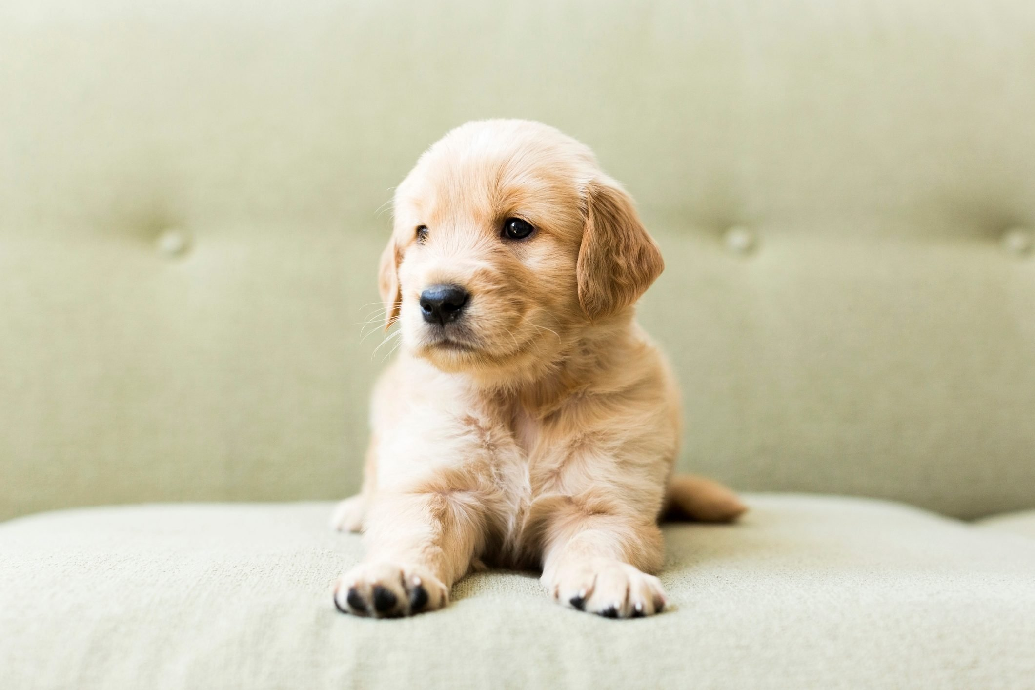 puppy personality