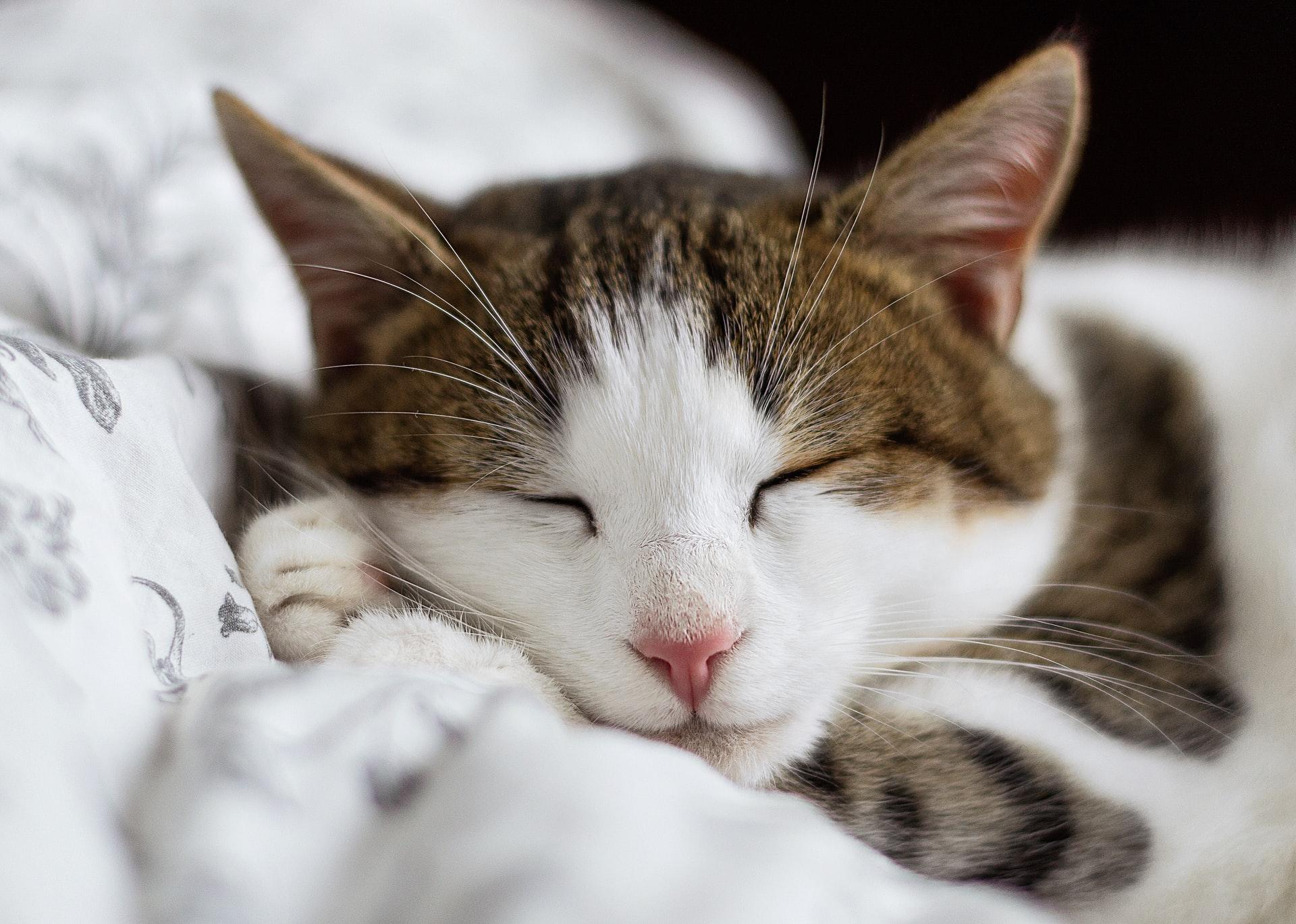 vaccine cats